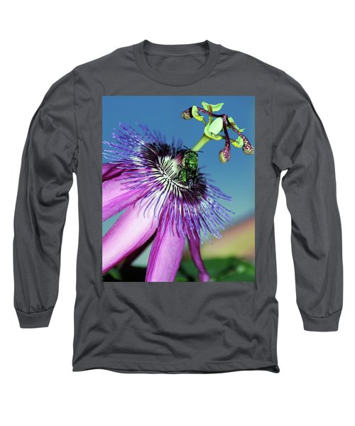 Green Hover Fly On Passion Flower Long Sleeve T-Shirt