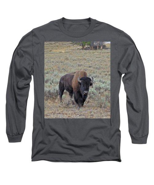 Handsome Bison Bull Long Sleeve T-Shirt