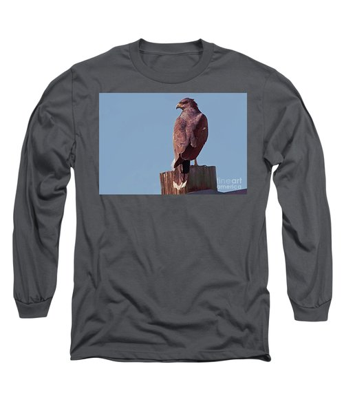 Harris Hawk Long Sleeve T-Shirt by Anne Rodkin