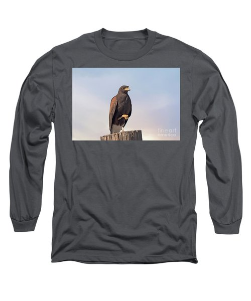 Harris Hawk - Birds Long Sleeve T-Shirt by Anne Rodkin