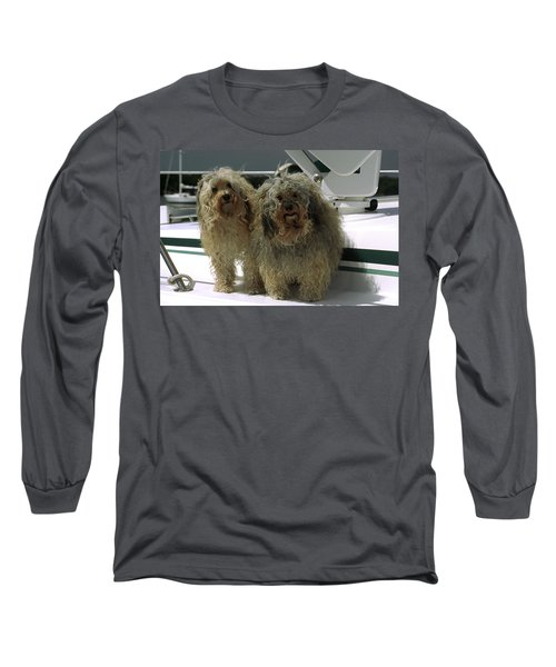 Long Sleeve T-Shirt featuring the photograph Havanese Dogs by Sally Weigand