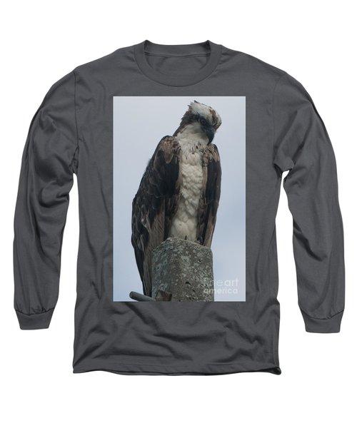 Hawk Facing Down Long Sleeve T-Shirt