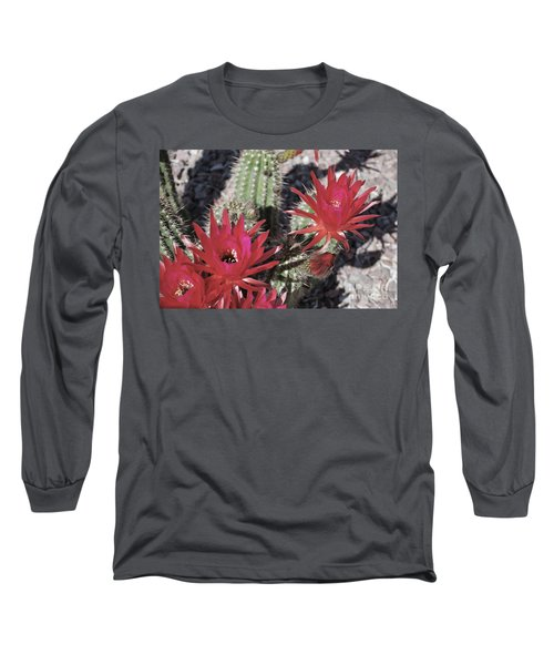 Hedgehog Cactus Long Sleeve T-Shirt by Donna Greene
