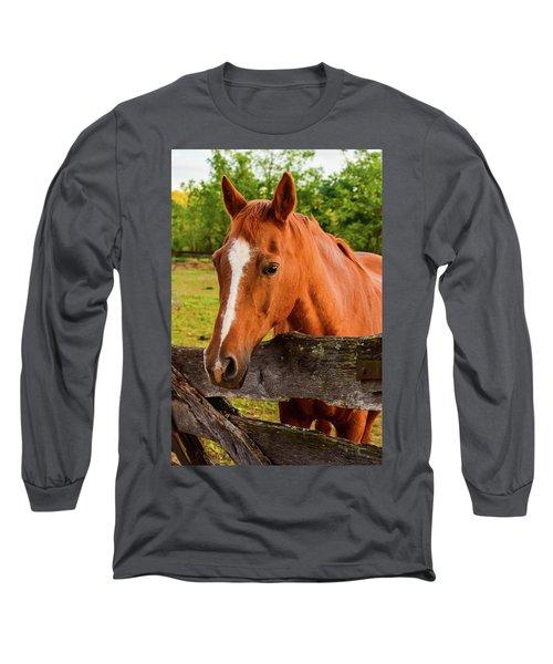 Horse Friends Long Sleeve T-Shirt