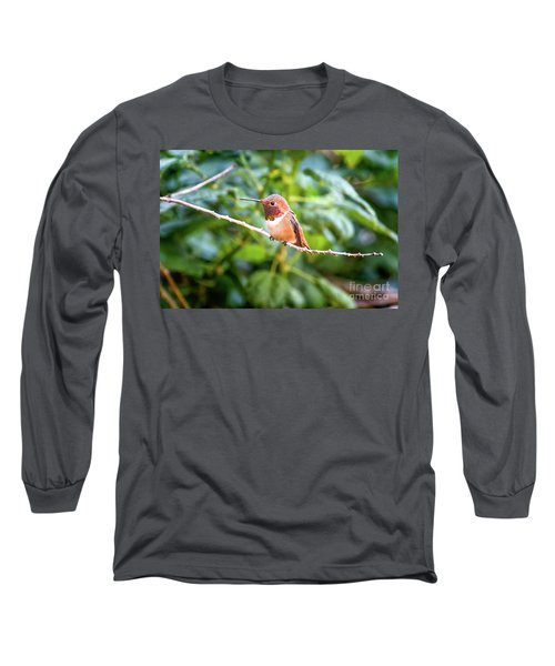Humming Bird On Stick Long Sleeve T-Shirt by Stephanie Hayes