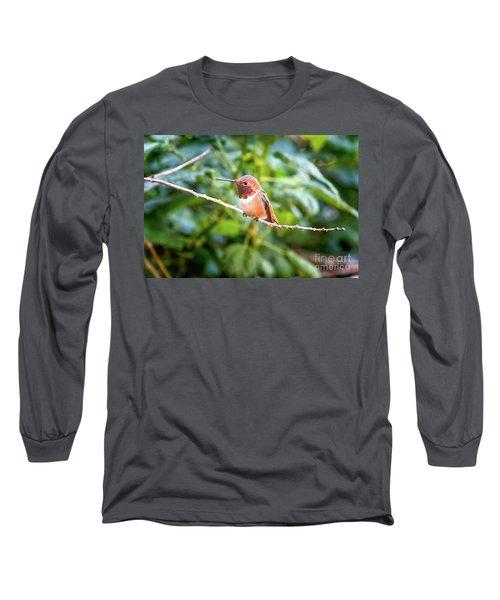 Humming Bird On Stick Long Sleeve T-Shirt