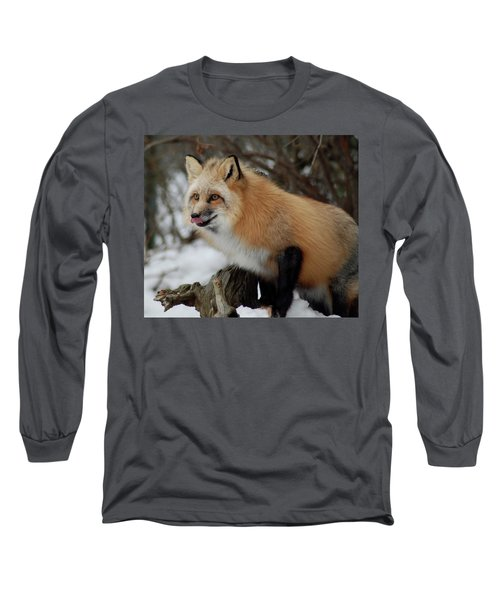 Long Sleeve T-Shirt featuring the photograph Hungry Fox by Richard Bryce and Family