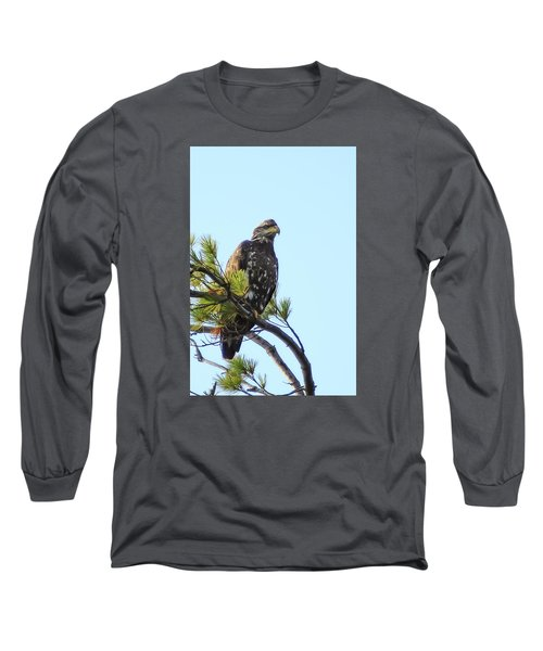 Immature Bald Eagle 1 Long Sleeve T-Shirt