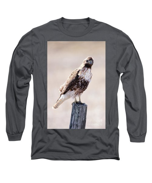 Immature Red Tailed Hawk Long Sleeve T-Shirt