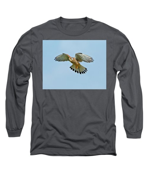 Long Sleeve T-Shirt featuring the photograph Kestrel In The Wind . by Paul Scoullar