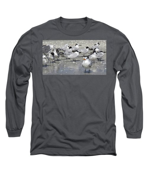 Least Terns Long Sleeve T-Shirt by Melinda Saminski