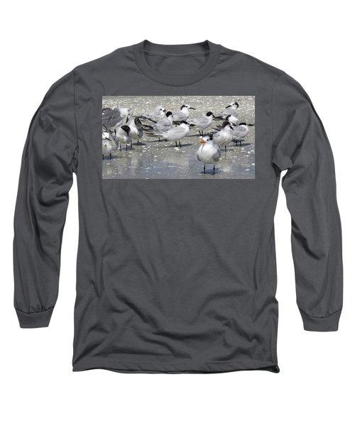 Least Terns Long Sleeve T-Shirt by Melinda Saminski