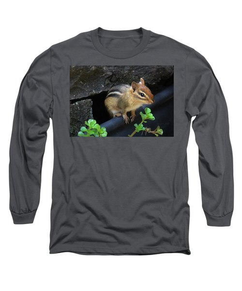 Little Chipmunk  Long Sleeve T-Shirt