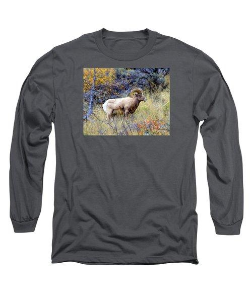 Long Sleeve T-Shirt featuring the photograph Long Horns Sheep by Irina Hays