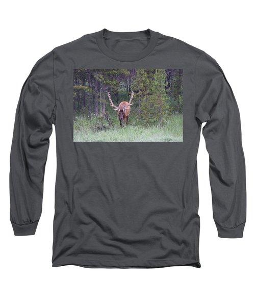 Bull Elk Rmnp Co Long Sleeve T-Shirt