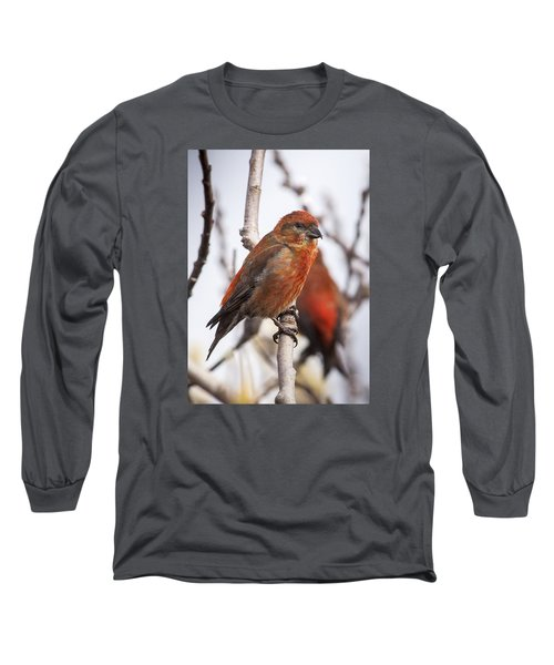 Male Red Crossbills Long Sleeve T-Shirt by Robert Potts