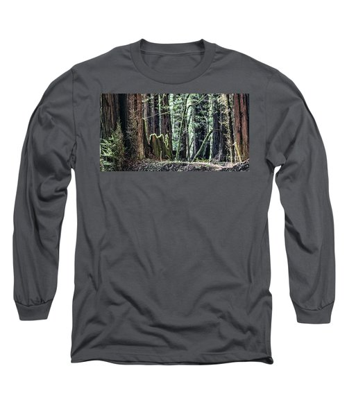 Long Sleeve T-Shirt featuring the photograph Morning Redwoods by Shirley Mangini