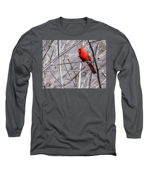 Northern Cardinal Feeding Long Sleeve T-Shirt by Edward Peterson