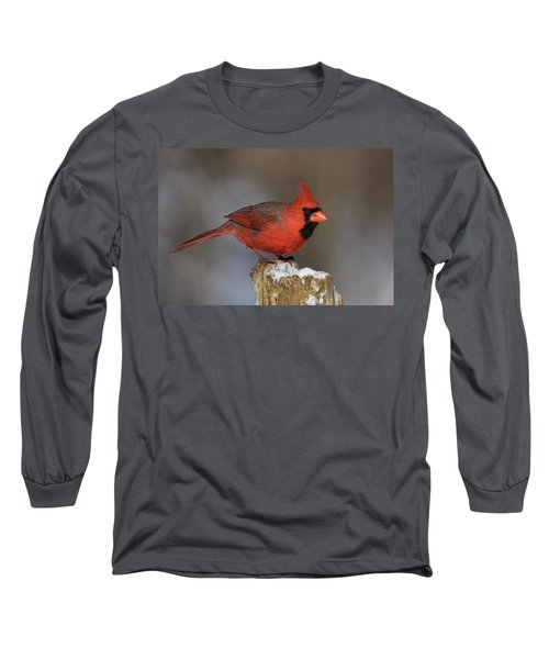 Long Sleeve T-Shirt featuring the photograph Northern Cardinal In Winter by Mircea Costina Photography