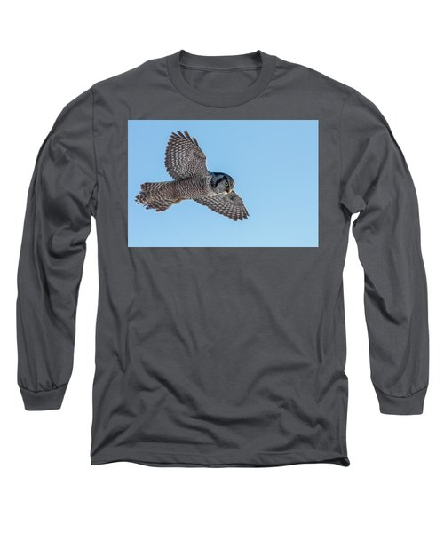 Long Sleeve T-Shirt featuring the photograph Northern Hawk Owl Hunting by Mircea Costina Photography