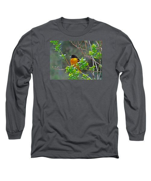 Oriole On The Lilac Long Sleeve T-Shirt by Larry Capra