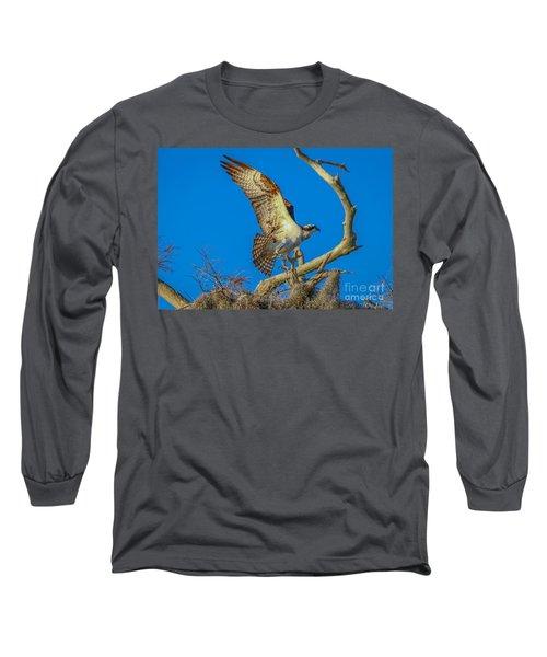 Osprey Landing On Branch Long Sleeve T-Shirt by Tom Claud