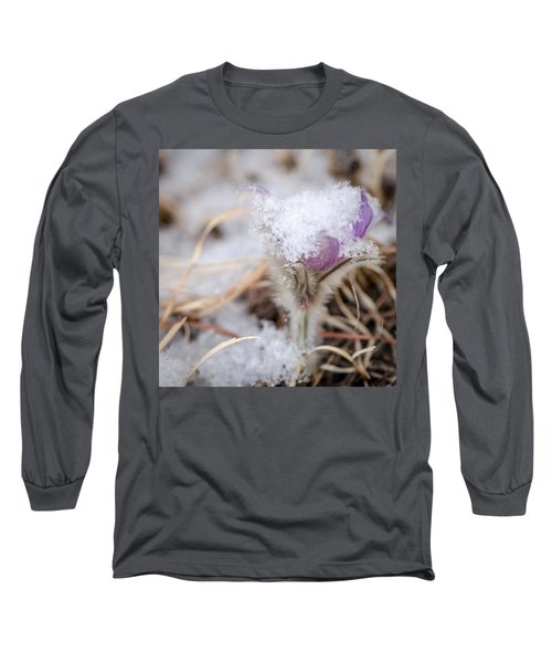 Pasqueflower In The Snow Long Sleeve T-Shirt