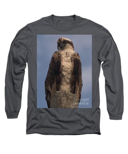 Perched Hawk Long Sleeve T-Shirt