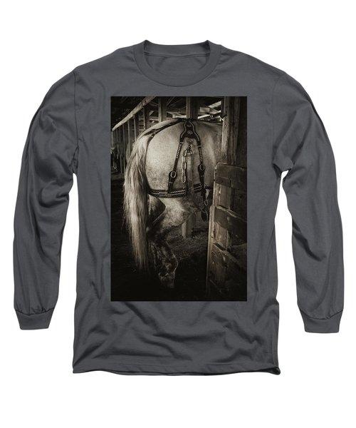 Percheron Draft Horse Long Sleeve T-Shirt by Theresa Tahara