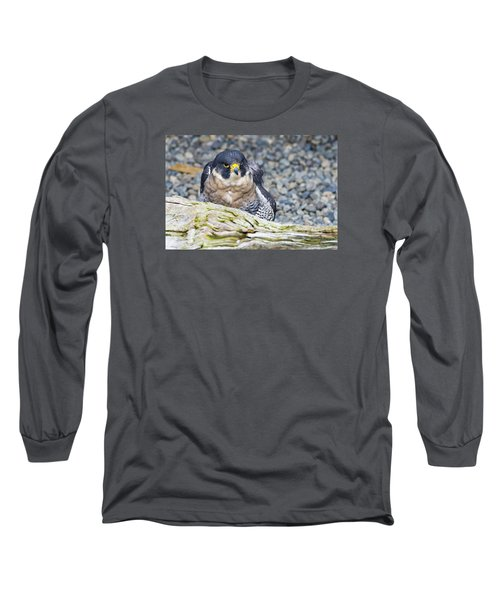 Peregrine Falcon 1 Long Sleeve T-Shirt