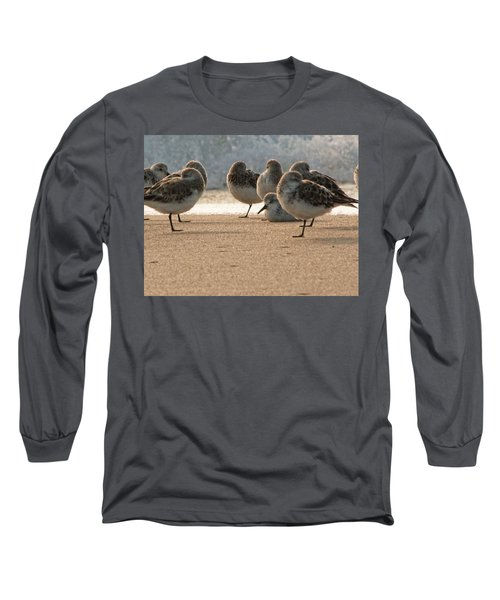 Plovers In The Morning Sunlight Long Sleeve T-Shirt