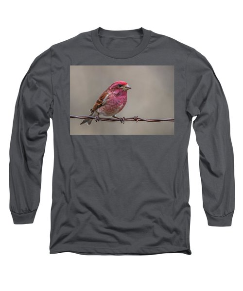 Long Sleeve T-Shirt featuring the photograph Purple Finch On Barbwire by Paul Freidlund
