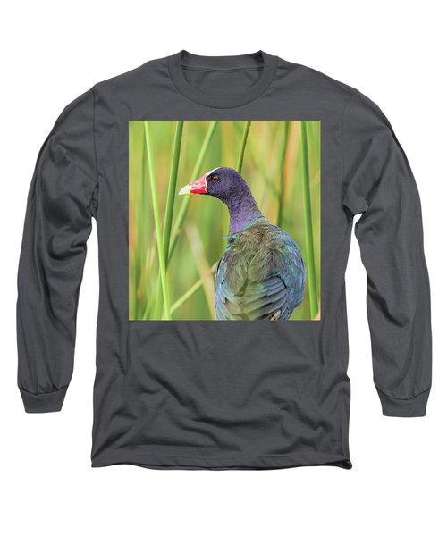 Purple Gallinule Long Sleeve T-Shirt