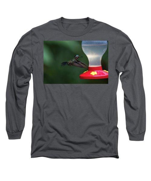 Purple-throated Mountain Gem Long Sleeve T-Shirt by James David Phenicie