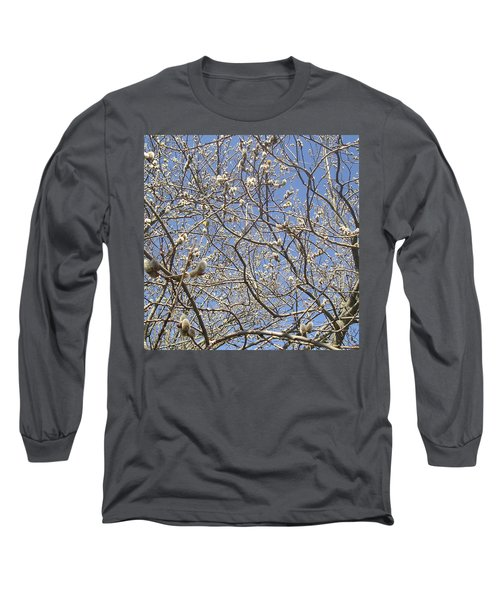 Pussywillows Bursting To Life Long Sleeve T-Shirt by Roger Swezey