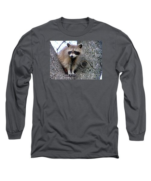 Raccoon Lookout Long Sleeve T-Shirt