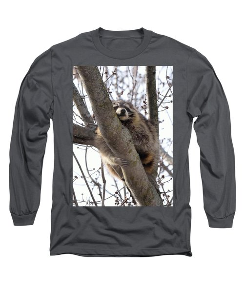 Afternoon Nap-raccoon Up A Tree  Long Sleeve T-Shirt