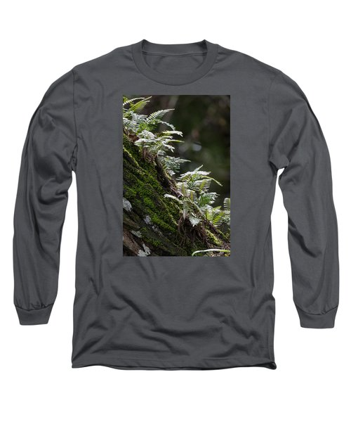 Reach For The Light Long Sleeve T-Shirt by Christopher L Thomley