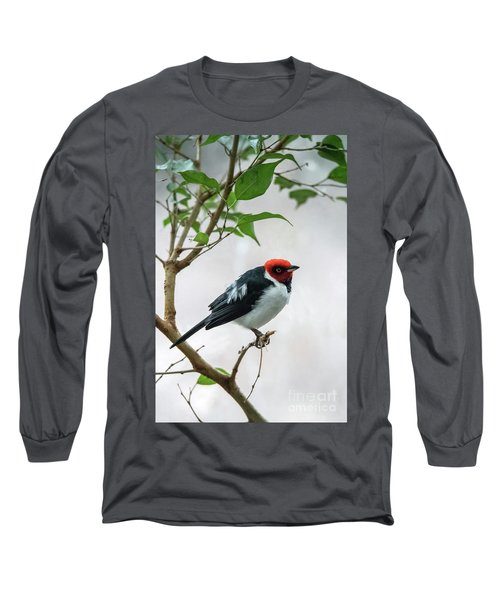 Red Capped Cardinal 2 Long Sleeve T-Shirt