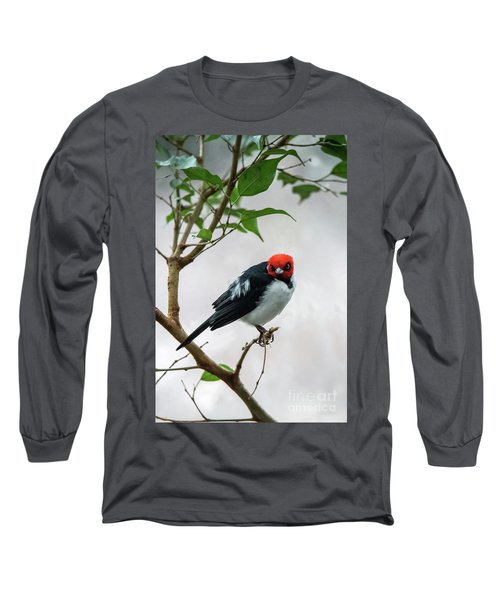 Red Capped Cardinal Long Sleeve T-Shirt