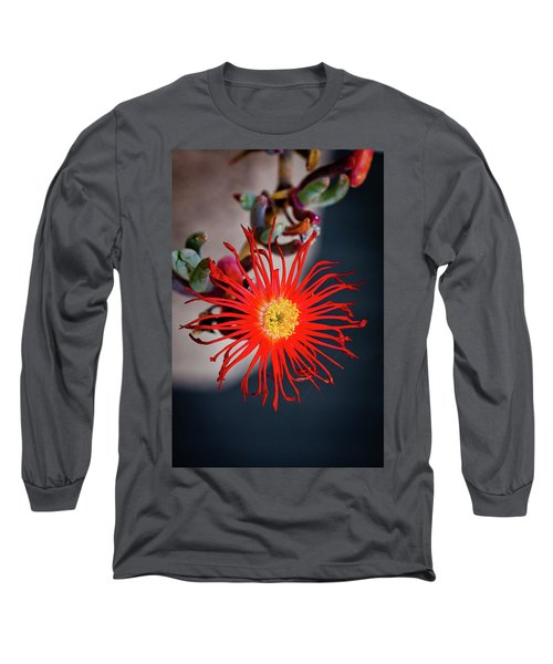 Long Sleeve T-Shirt featuring the photograph Red Crab Flower by Bruno Spagnolo