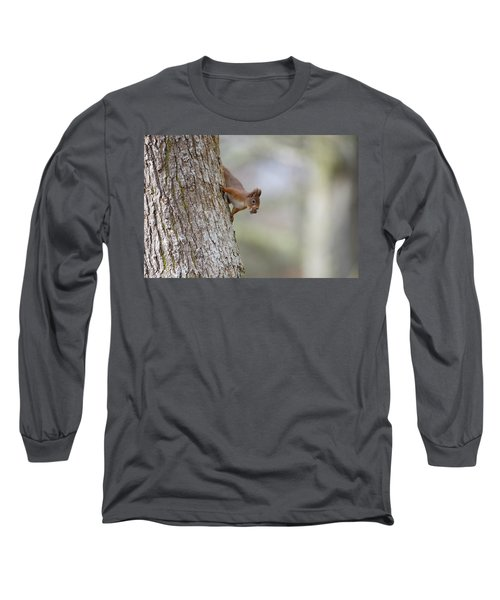 Red Squirrel Climbing Down A Tree Long Sleeve T-Shirt