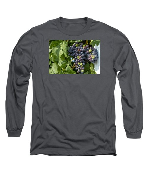 Red Wine Grapes On The Vine Long Sleeve T-Shirt by Teri Virbickis