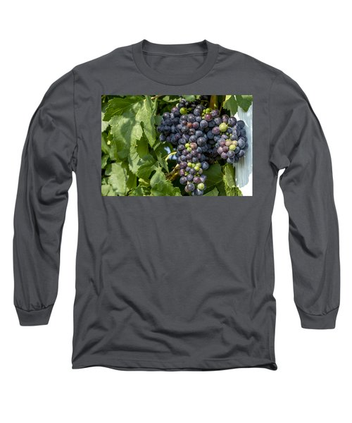 Red Wine Grapes On The Vine Long Sleeve T-Shirt