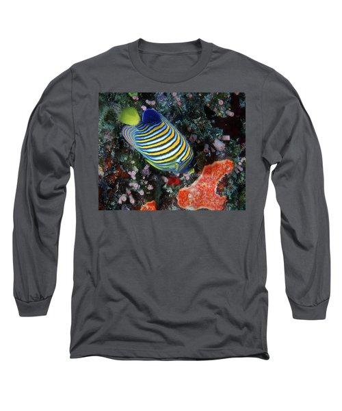 Regal Angelfish, Great Barrier Reef Long Sleeve T-Shirt