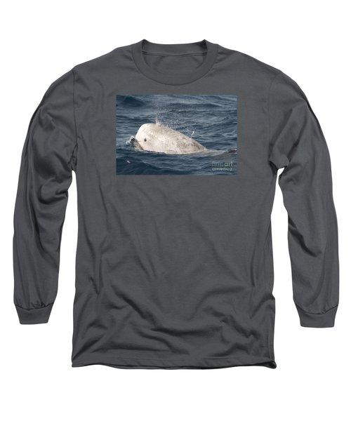 Risso Dolphin Long Sleeve T-Shirt by Loriannah Hespe