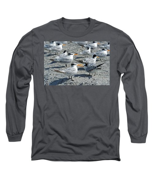 Royal Terns Long Sleeve T-Shirt by Paul Mashburn