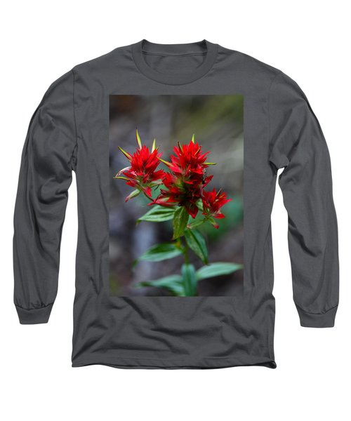 Scarlet Red Indian Paintbrush Long Sleeve T-Shirt