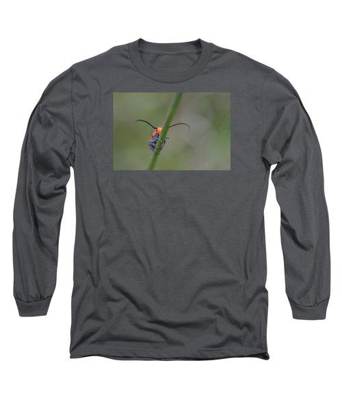 Shy Beetle Long Sleeve T-Shirt by Janet Rockburn