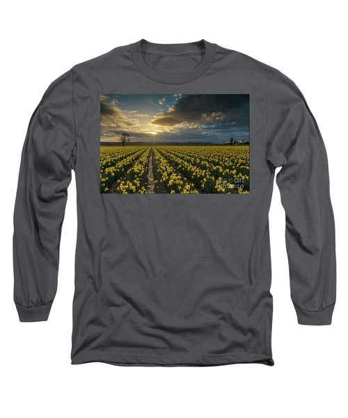 Long Sleeve T-Shirt featuring the photograph Skagit Daffodils Golden Sunstar Evening by Mike Reid